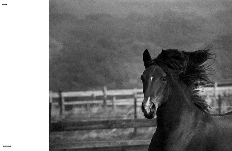 Wild-Horses_fy5