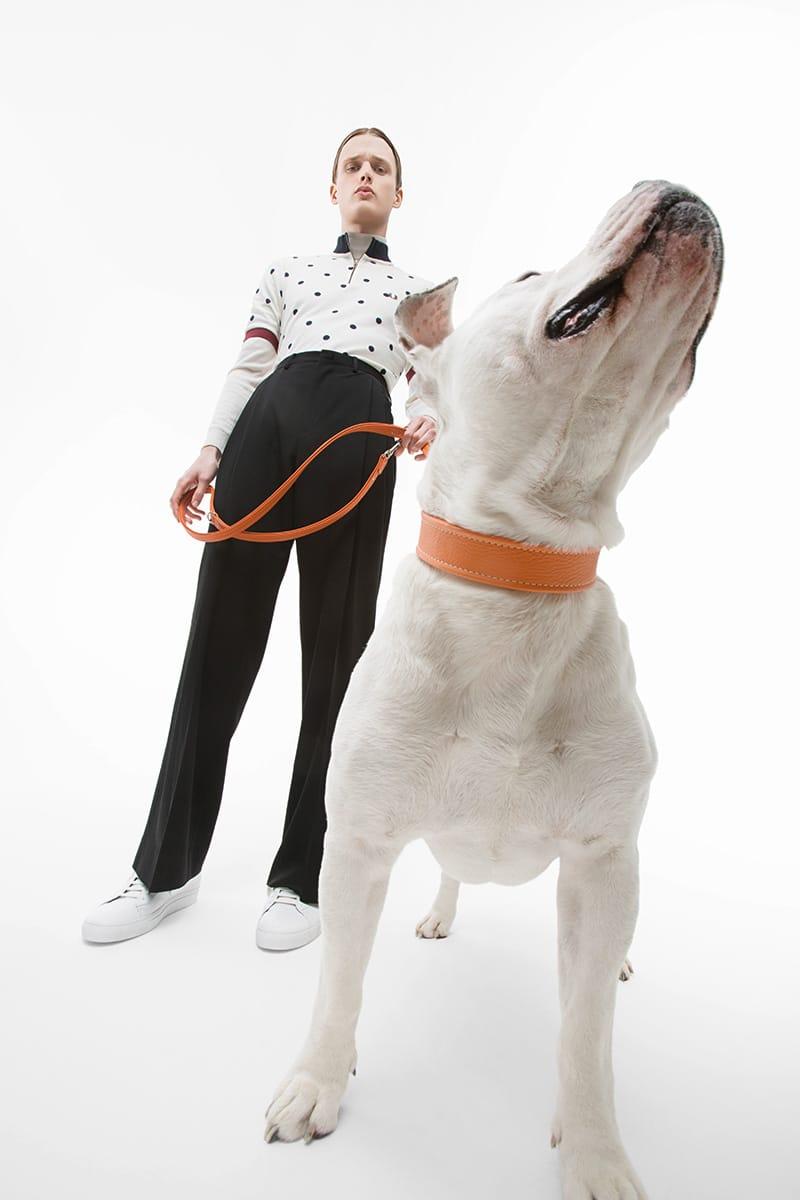 The-Dogs-Bollocks_fy5