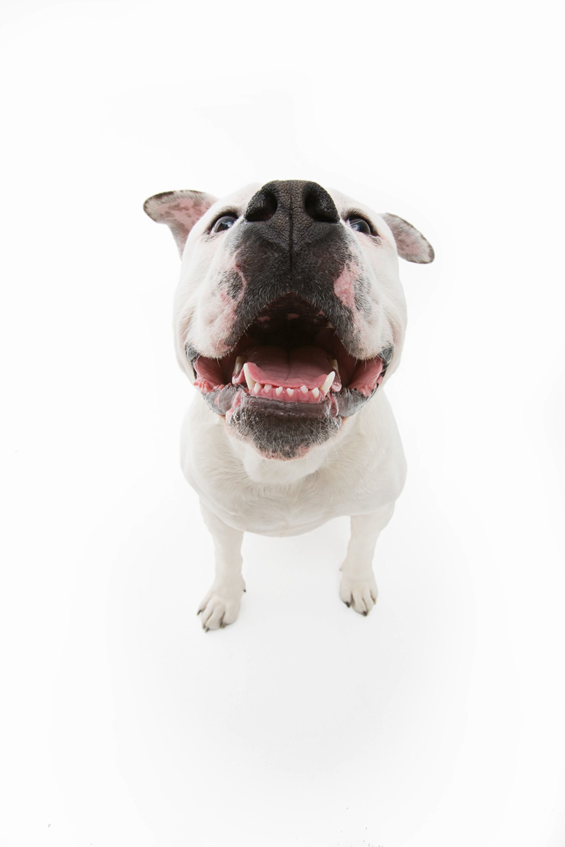 The-Dogs-Bollocks_fy9