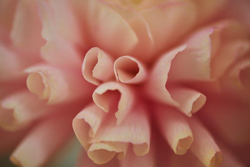 Portraits-Nudes-Flowers_fy14